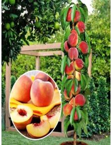 Колоновидный персик Медовый в Бердске